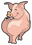 pulled pork recipes